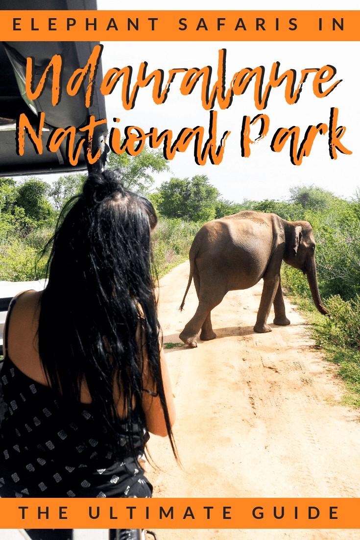 udawalawe national park elephant safari guide