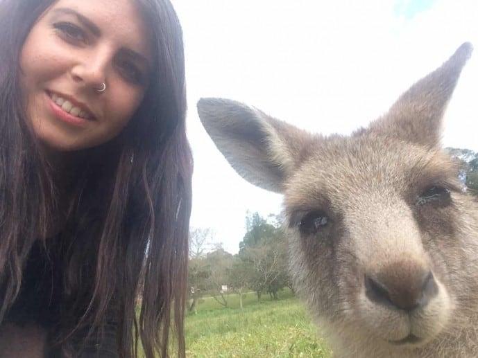 kangaroos in morisset sydney