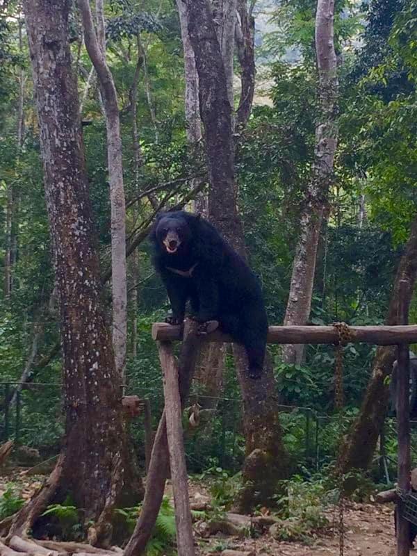 Kuang Si Falls Laos Free the bears