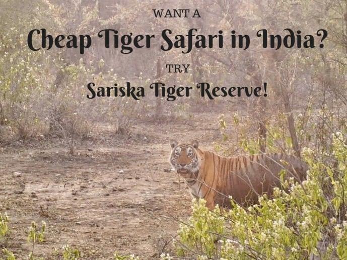 Sariska Tiger Reserve Safari PRICE