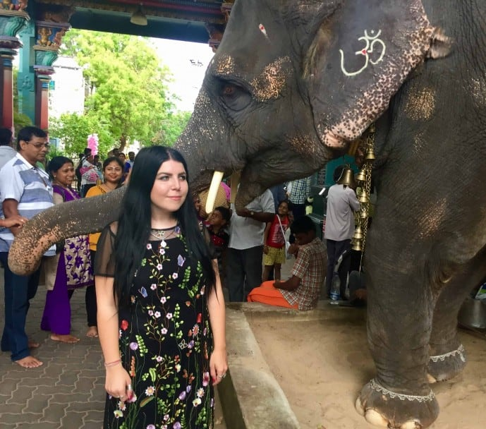 elephant in pondicherry | pondicherry travel guide