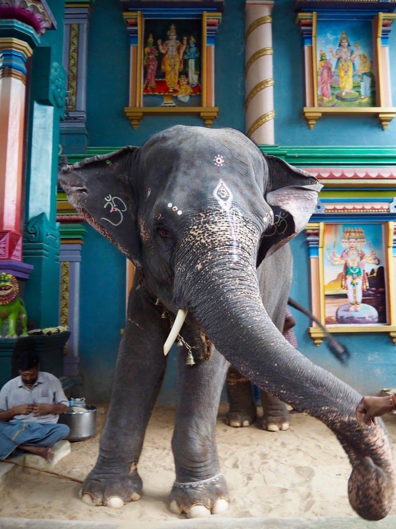 elephant temple pondicherry