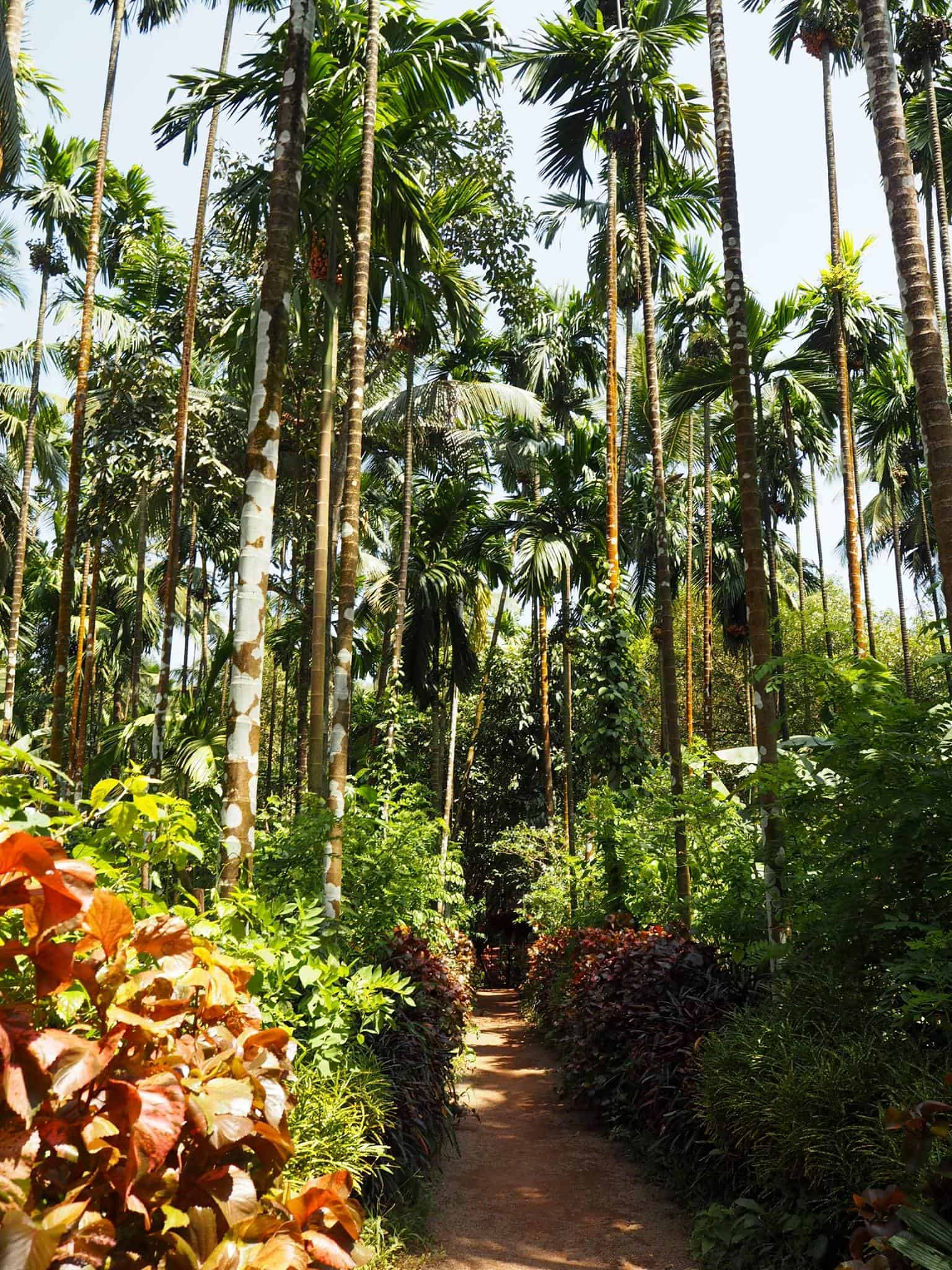 Goa beyond beaches SAHARIKA SPICE FARM