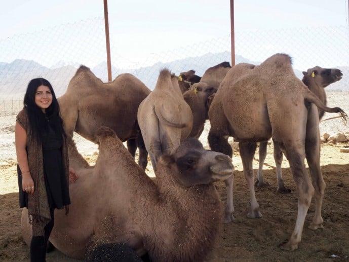 chushot camel farm | ladakh off the beaten track