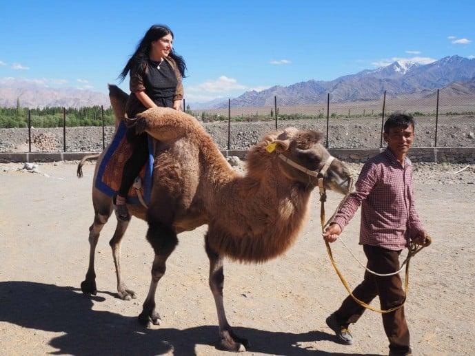 double hump camel chushot