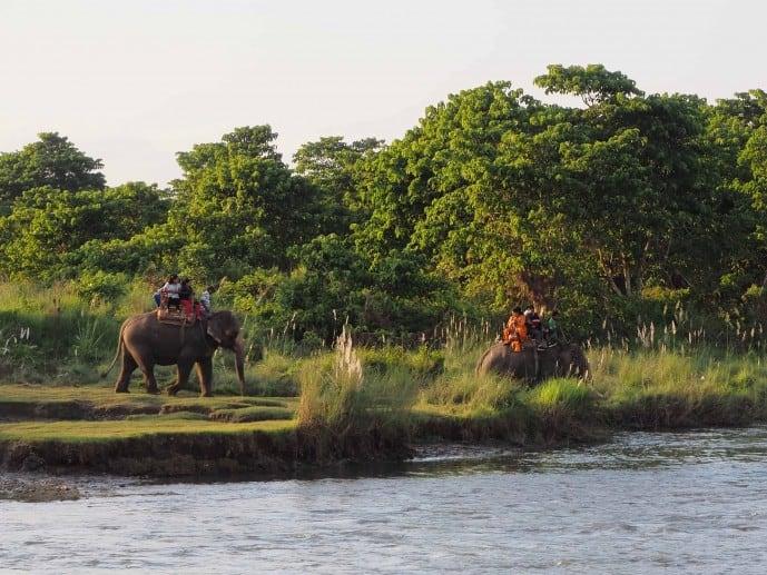 elephant safari chitwan national park