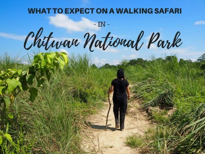walking safari chitwan national park