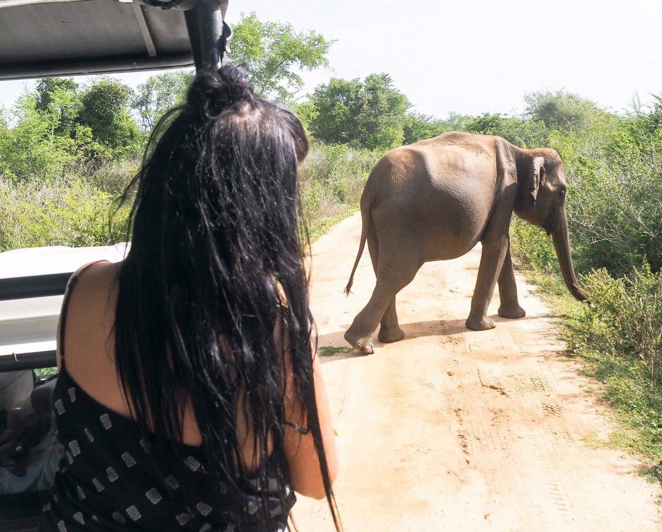 Udawalawe Safari | elephant safari udawalawe