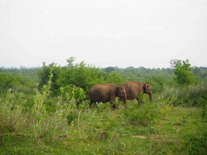 elephant safari udawalawe
