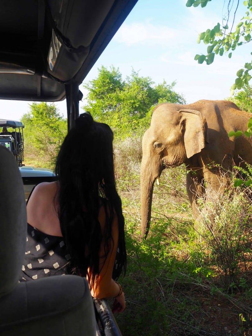 Udawalawe safari Sri Lanka