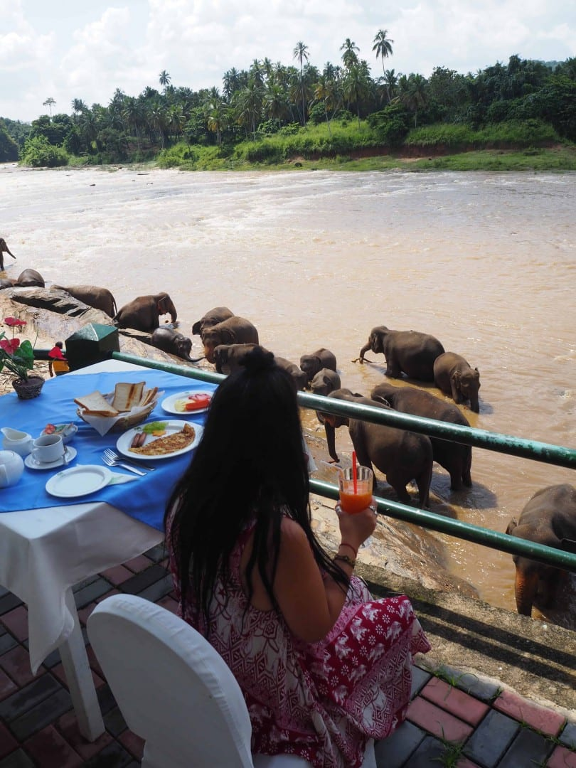 breakfast with elephants sri lanka