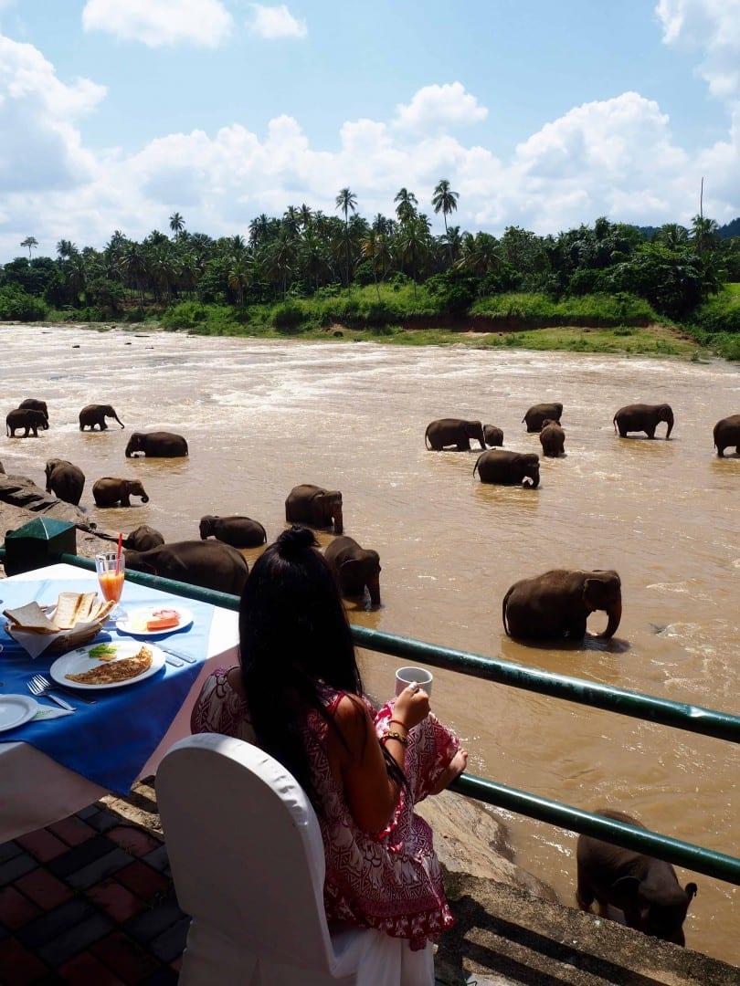 breakfast with elephants in sri lanka