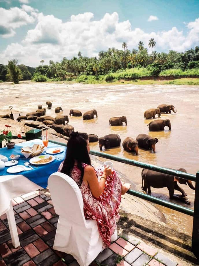 breakfast with elephants sri lanka