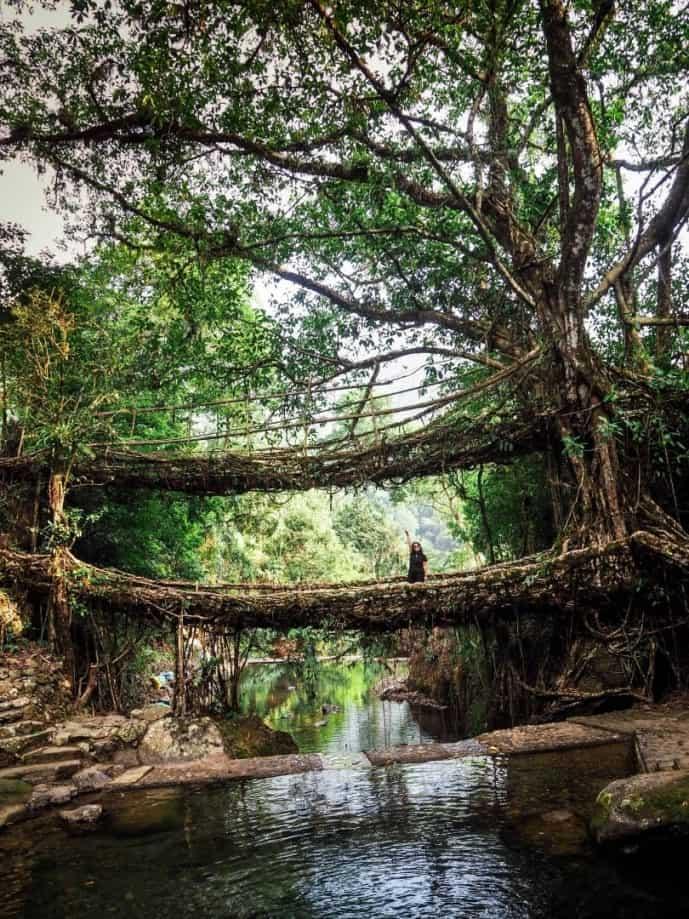 how to reach double decker root bridge cherrapunje