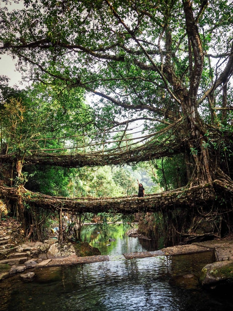 how to reach double decker root bridge cherrapunje