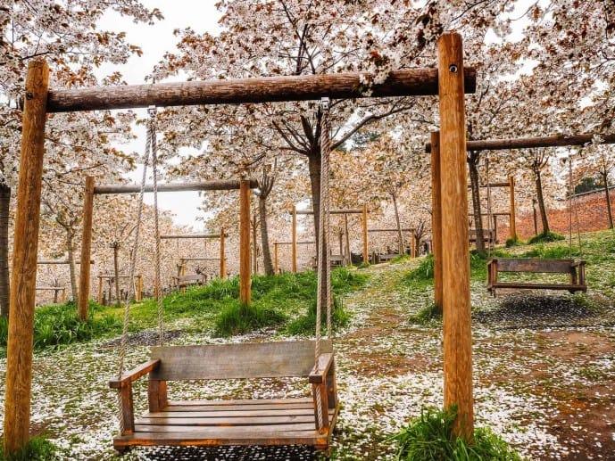 The Alnwick Garden blossom Swings