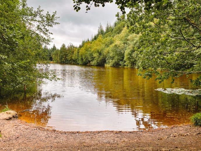 Merlin Speech House Lake Forest of Dean
