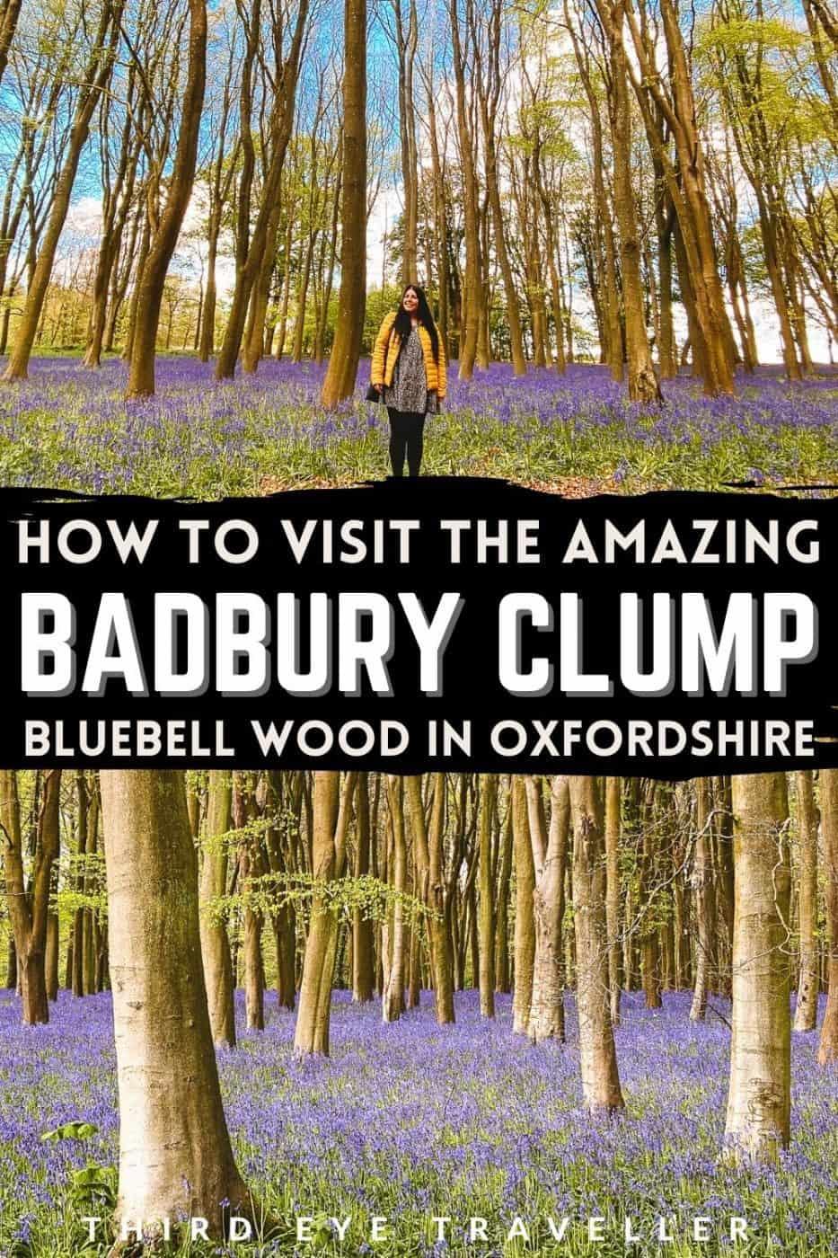 Badbury Clump Bluebell Wood