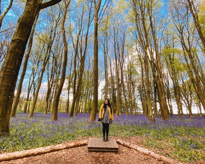 Badbury Clump Bluebells Wood National Trust Oxfordshire