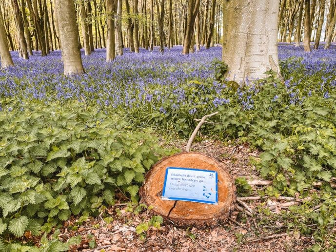Bluebells don't grow where footsteps go message from the National Trust at Badbury Clump
