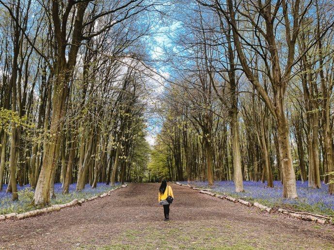 Badbury Hill Bluebell Wood