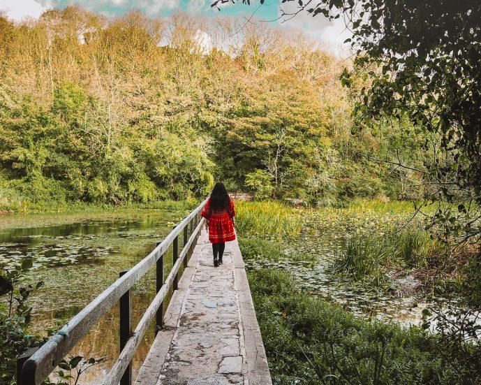 Bosherton Lily Ponds Pembrokeshire