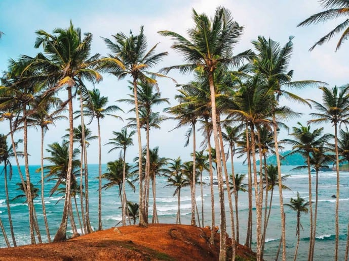 Coconut Tree Hill Sri Lanka