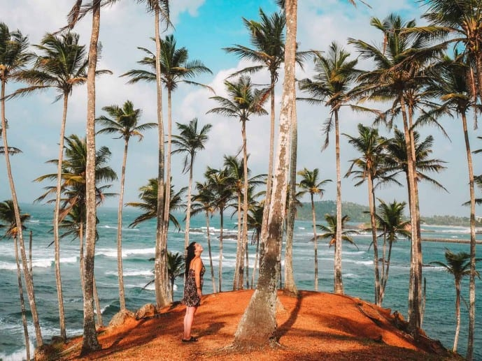 Palm Tree Hill Sri Lanka