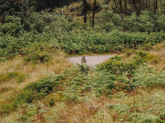 Nilgiri Tahr Deer Eravikulam National Park