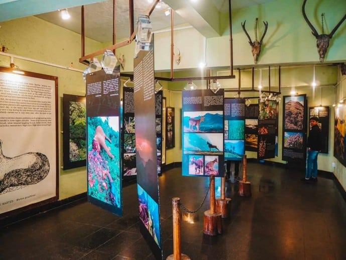 Eravikulam National Park Museum in Munnar