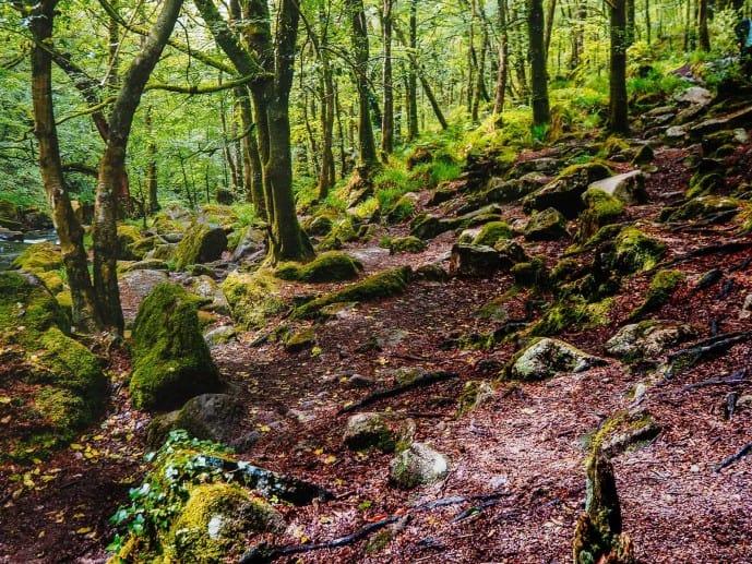 Golitha Falls trail