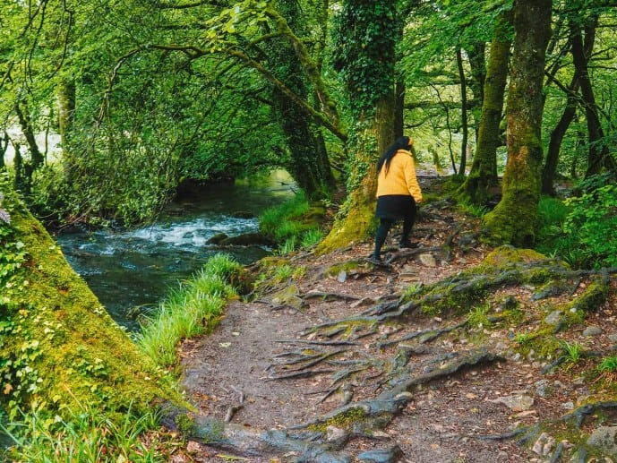 What to wear for Golitha falls walk