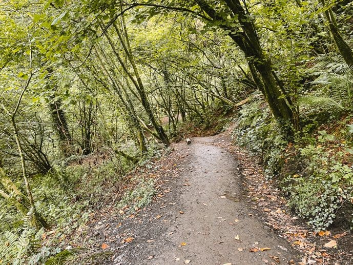 The walk through the forest to Henrhyd Falls