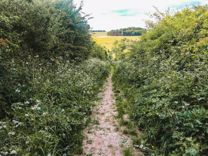 The overgrown path in Fyfield towards the Devil's Den