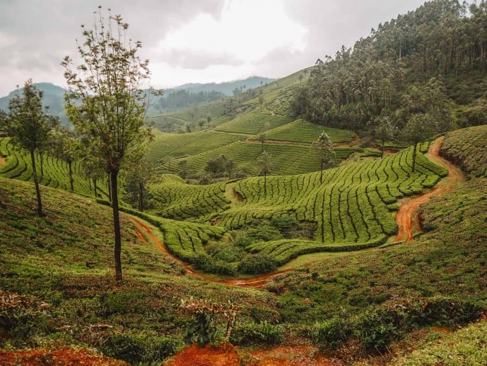 Kerala Itinerary | Things to do in Munnar