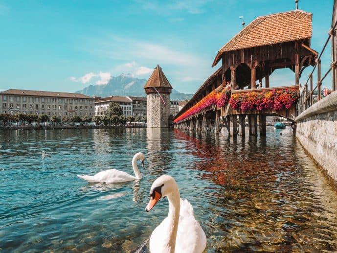 Lucerne Chapel Bridge Swans River Reuss