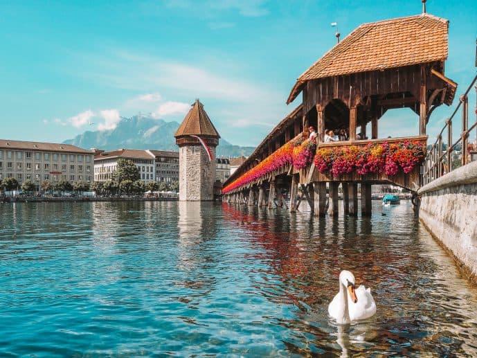 Swans on the River Reuss at Kapellbrucke Lucerne