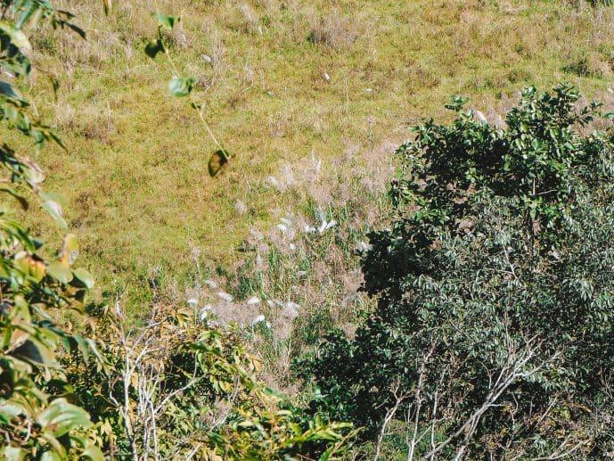 Sangai deer in Keibul Lamjao Manipur