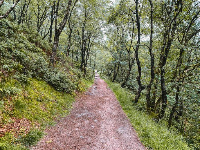 Black forest Lud's Church walk Peak District