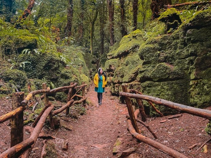 Puzzlewood Forest of DEan