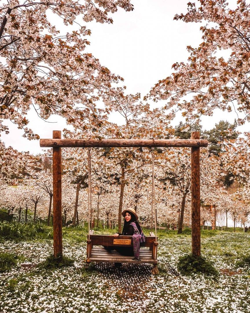 the alnwick garden blossom festival