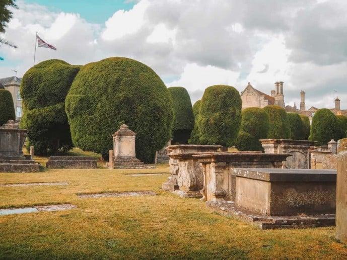 Painswick Church Yew Trees