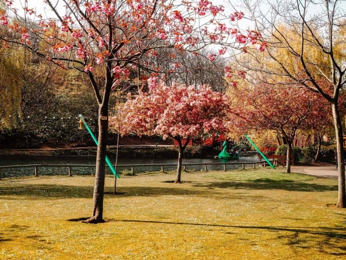 Peasholm Park tree trail