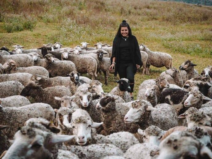 Sangti Valley sheep