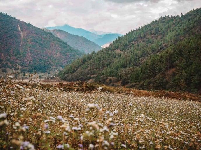 Wildflowers in Sangti Valley