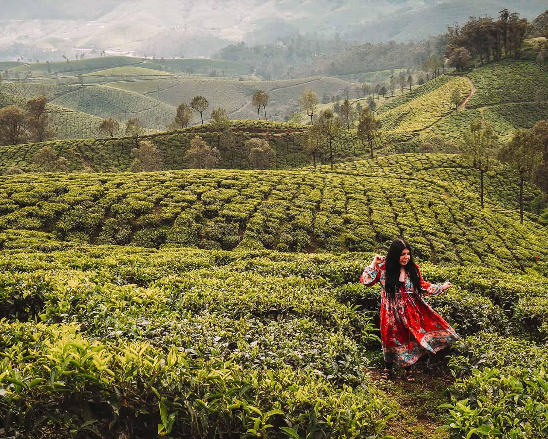 Tea plantation in Munnar | Lockhart Tea Plantation