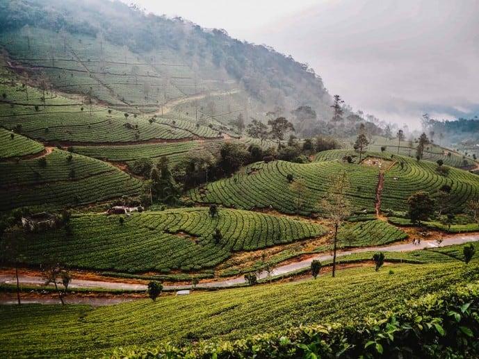 Tea plantation in Munnar | Letchmi Tea Estate