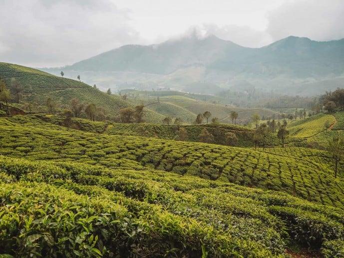 Lockhart Tea Plantation | Tea Plantation in Munnar