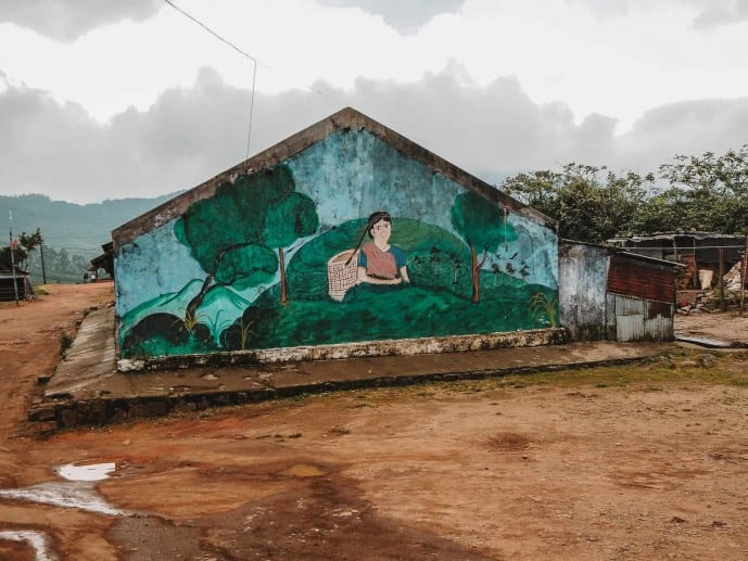 Lockhart Tea Estate | Tea plantations in Munnar
