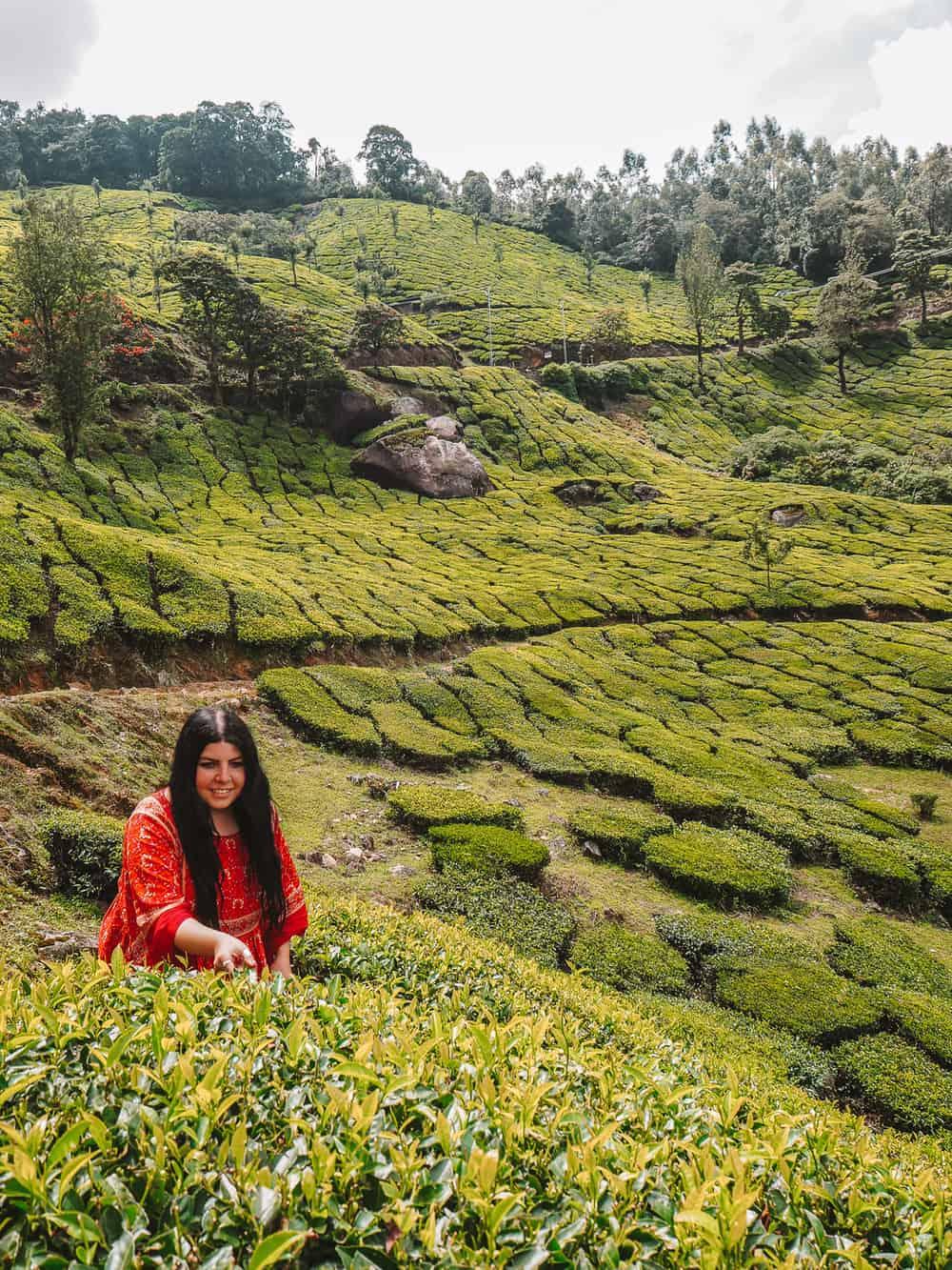 Things to do in Munnar | Tea plantations in Munnar